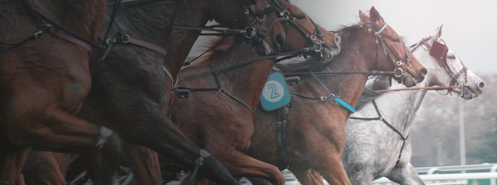 Trav & galopp hästspel