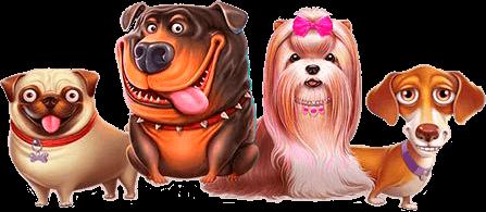 the dog house hundar